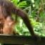 Junglehero